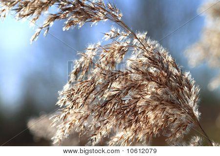 Close Up Of Tall Winter Grass