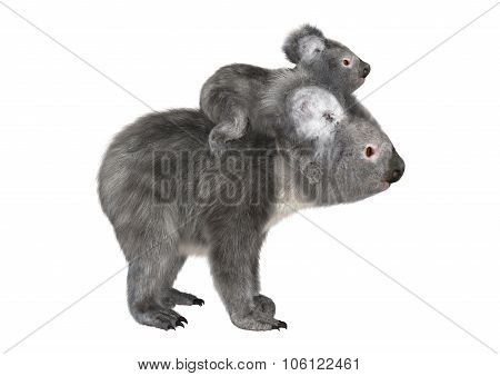 Australian Koala Bears