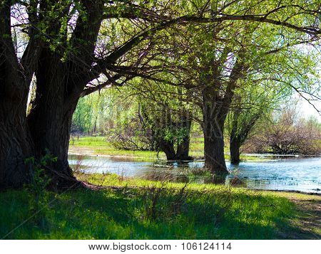 Flooding in the woods in spring