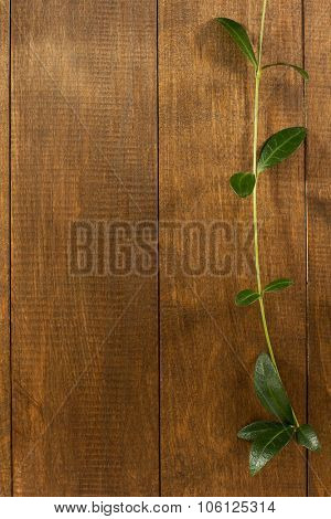 periwinkle on wooden background texture
