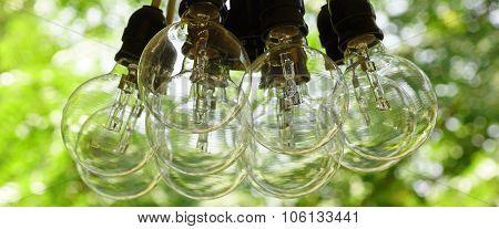 Big Light Bulb Bundle Hanging In A Garden