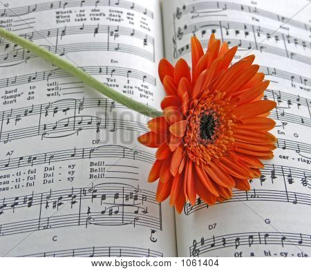 Orange Gerbera Daisy On The Sheet Music Daisy Bell