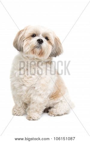 Small Fluffy White Dog