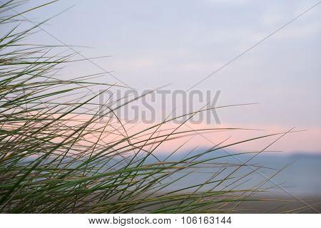 Wild Dune Grass In Beal Kerry