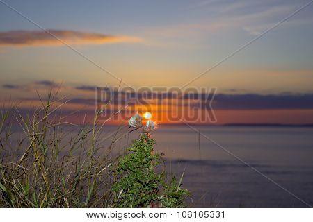 Yellow Sunset Tall Thistles