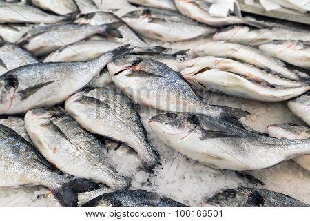 dorado fish on ice