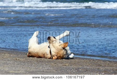 The Labrador Playing In The Sea