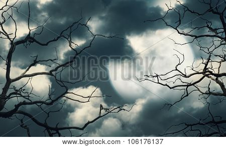 Halloween Background With Forest, Sky And Moon