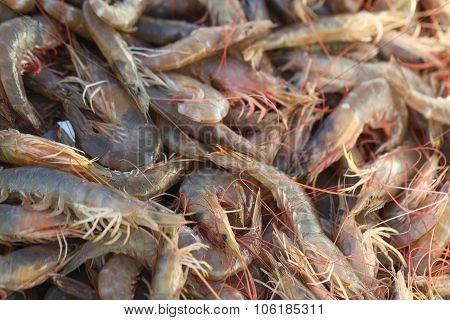Shrimps.