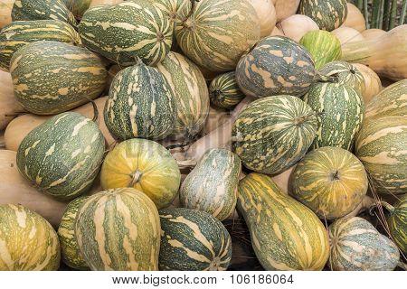 Pumpkins, Cucurbita Argyrosperma, Moschata, Butternut, Maxima, Cushaw