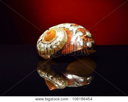 Pearl shell on a black background