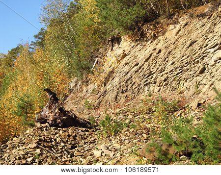 stump under the rock