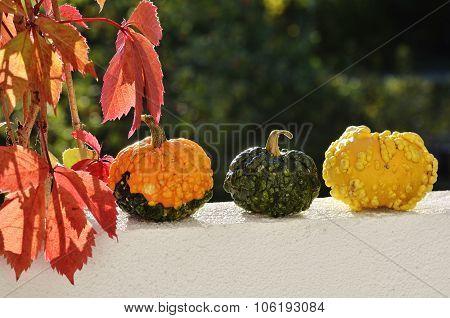 still life three small pumpkins and rad leaves in autumn