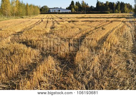 Autumn Landscape, Sloping Field