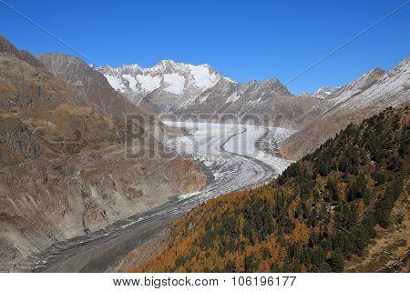 Golden Autumn Day At The Aletsch Glacier