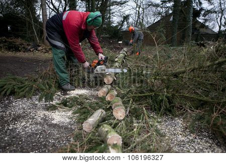 Sawing Firewood