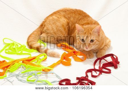 Cat playing with shoelaces