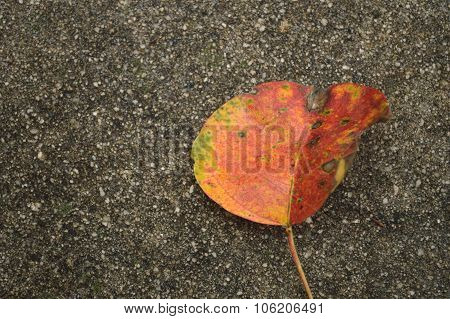 Fall Leaves On Wet Concrete Sidewalk