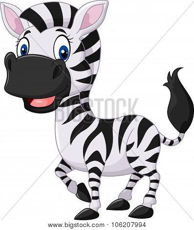 Cute baby zebra posing isolated on white background