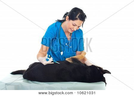 Vet Inject A Dog