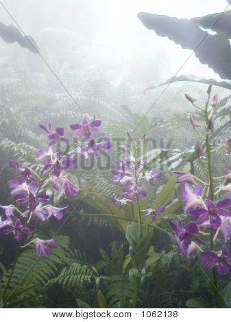 Orquídeas en niebla