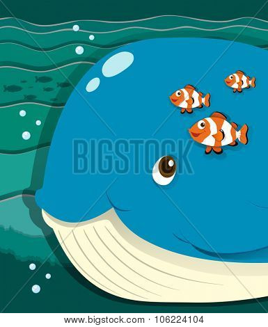 Whale and clownfish swimming  illustration