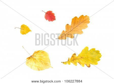 nature, season, autumn and botany concept - set of different fallen autumn leaves