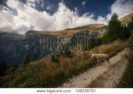 Sheep Grazing In Nature And Mountain Landscape On Background