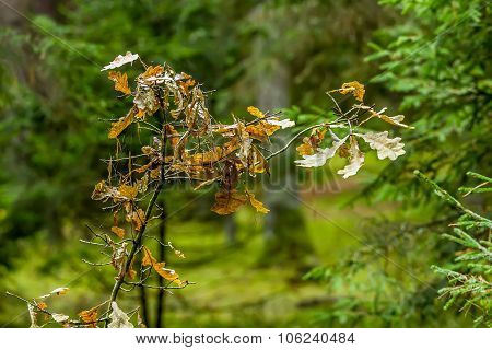 Tree Branch In The Forest