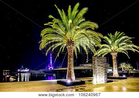 Palm Trees In The Night Lights In Marina Porto Montenegro, Tivat, Montenegro