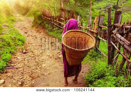 Nepalese woman with Wicker Basket on rural road in Nepal, Annapurna trekking