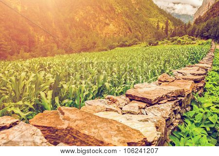 stone path and green plants in mountains in Nepal, Annapurna trekking