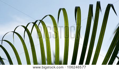 Fern Leaves Backlite And Bending In Wind Asia