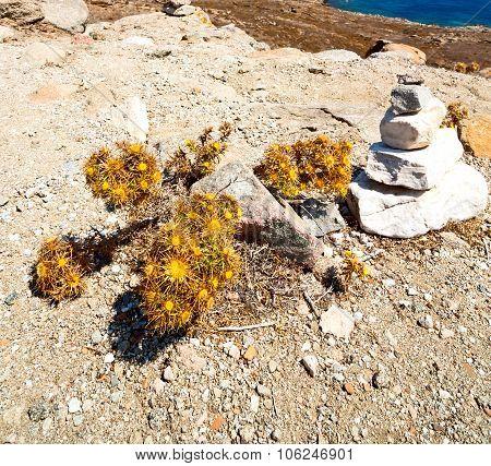 Bush   In Delos Greece The Flower