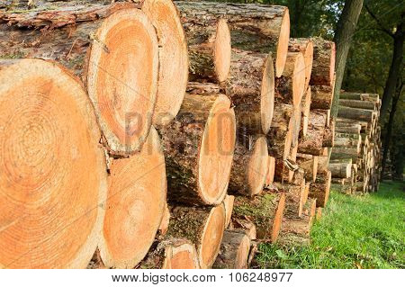 Logs Forest