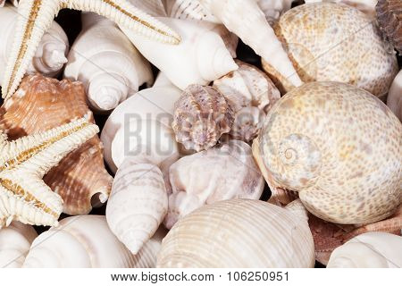 Background Of Group Of Various Seashells