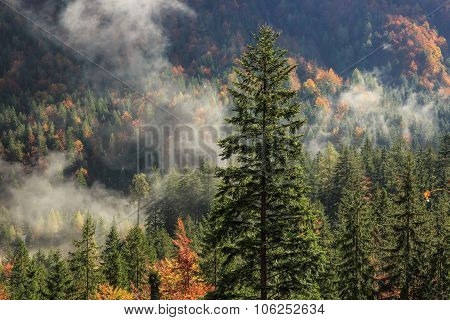 Coniferous And Deciduous Mountain Forest In Autumn Colors