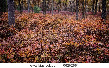 Beauty Of The Autumn Forest