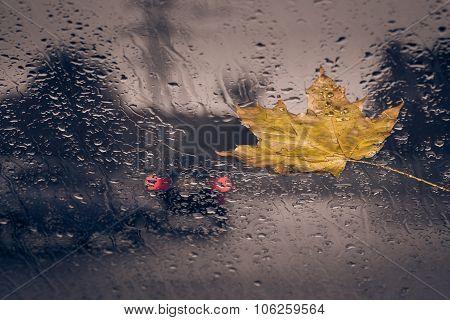 Fallen Yellow Leaf And Rain Drops