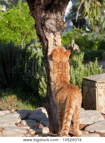 Cat sharpening his claws on a tree