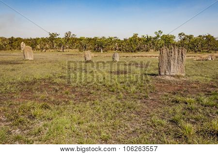 the termite mounds
