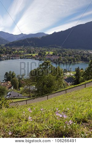 Lookout Point With View To Lake Tegernsee And Rottach-egern, Autumn Crocus