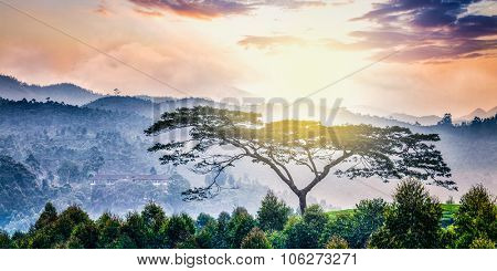 Panorama of lonely tree on sunrise in hills. Kerala, India