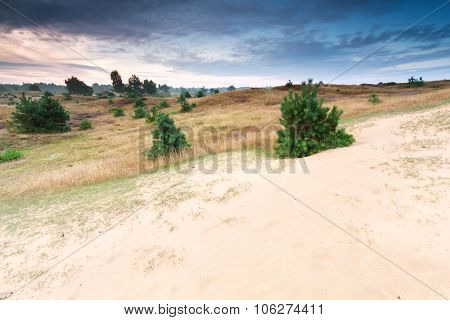 Little Pine Trees On Sand Dune At Sunrise