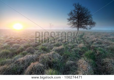 Sunrise And Little Path To Tree