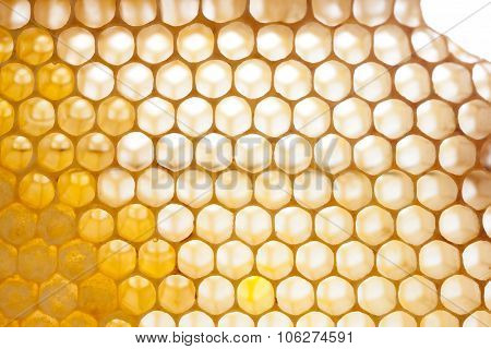 Organic honeycomb texture with fresh honey. closeup combs.