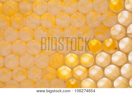 Natural honeycomb closeup. honey cells photography.