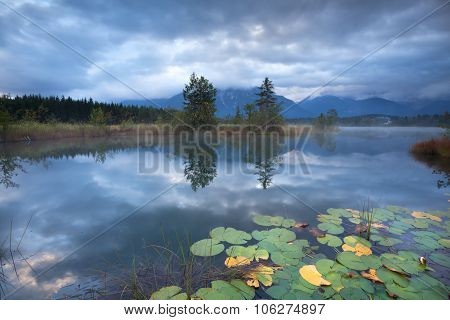 Water Lily On Alpine Lake In Autumn