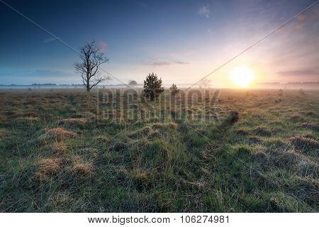 Misty Sunrise Over Marsh In Spring