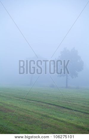 Tree On Pasture In Dense Fog